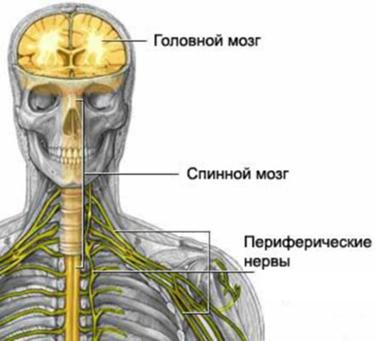 Функциональное воздействие йоги на физиологическое состояние  йога и нервная система йога и наука