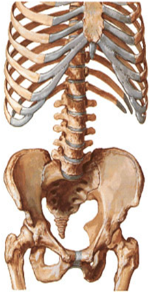 Положение позвоночника в йоге thumbnail