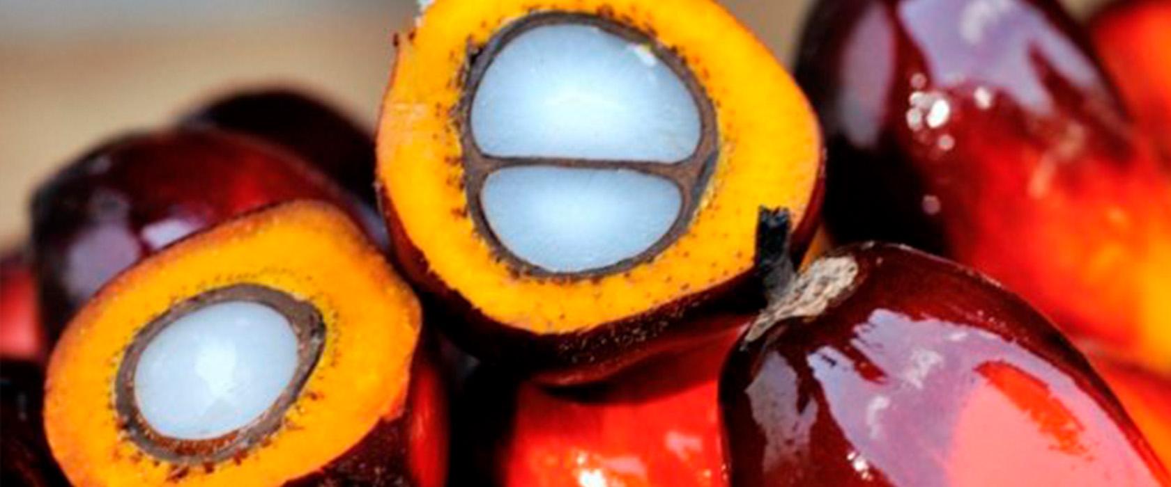 Как выглядит пальмовое масло
