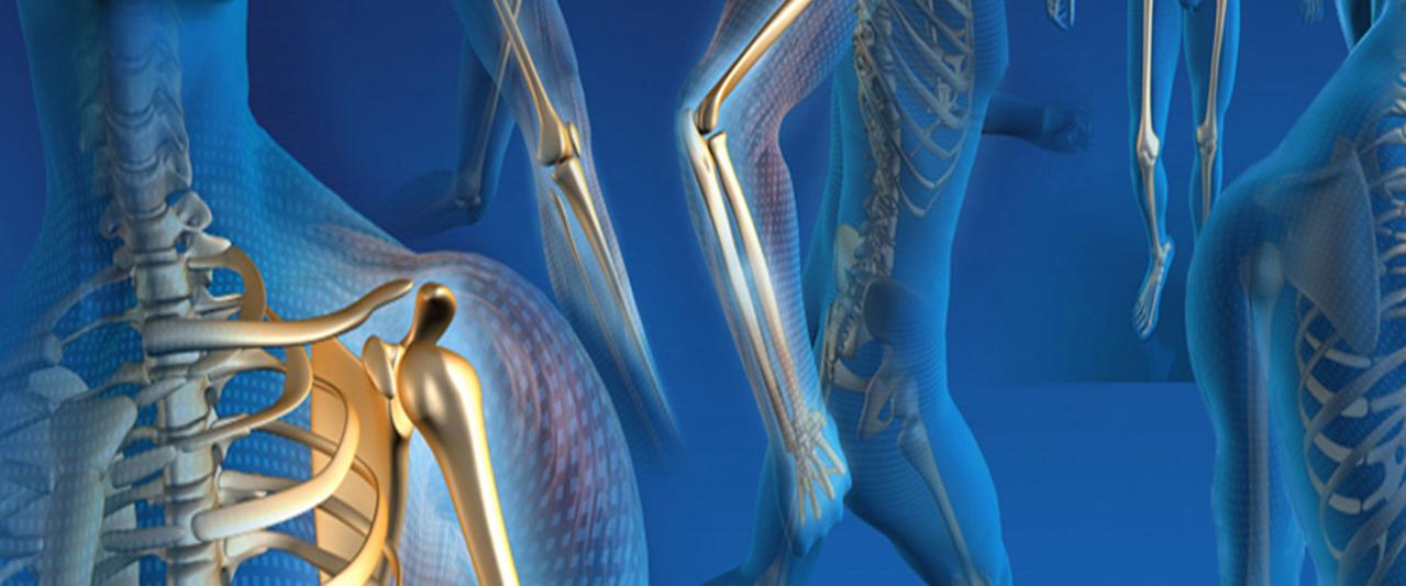 Суставы человека: анатомия и классификация