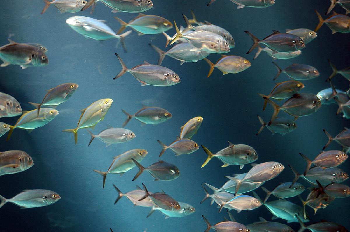 Рыба – чувствующее существо. Доказательства ученых