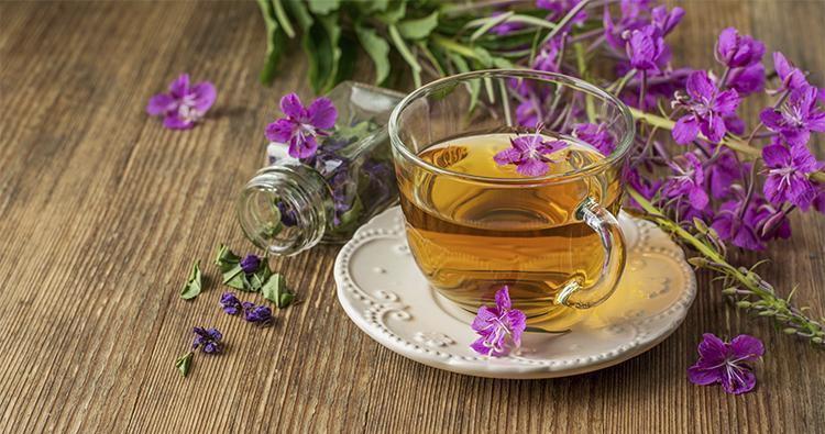 Иван чай цветок
