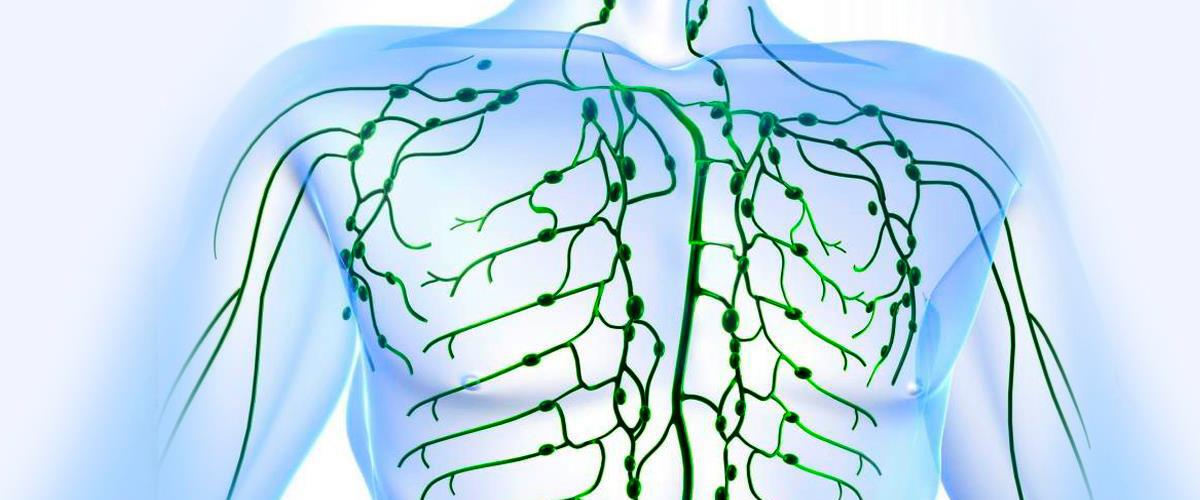 Лимфатические узлы на теле человека. Описание, атлас-схема, за что отвечают, как лечить