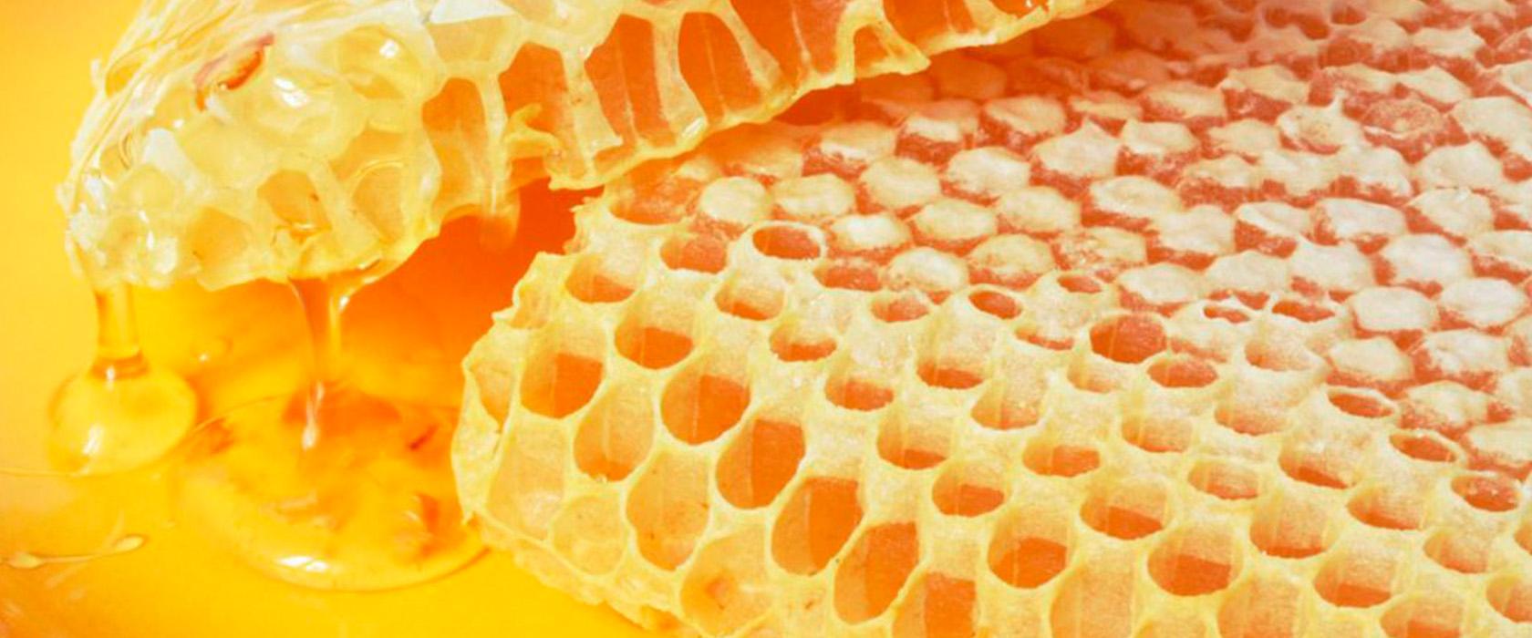 Что такое соты у пчел