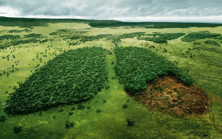 Влияние человека на экологию Это должен знать каждый житель  у экология сохранение планеты окружающая среда влияние человека на природу