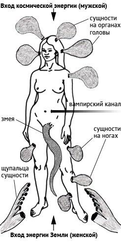 мафлоки лярвы энергетические паразиты человека