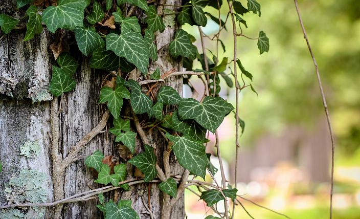 О чём думают и говорят растения? Деревья видят, слышат и думают.