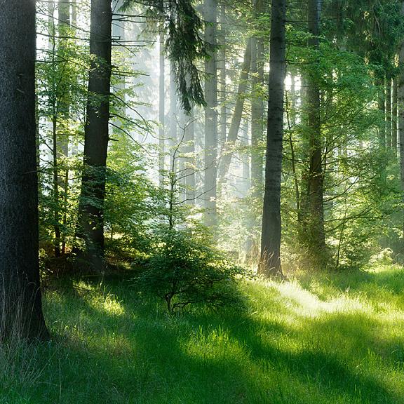 Шум леса