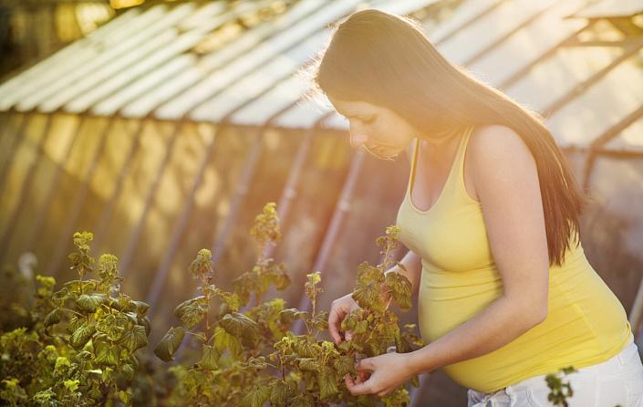Виноград, польза винограда при беременности