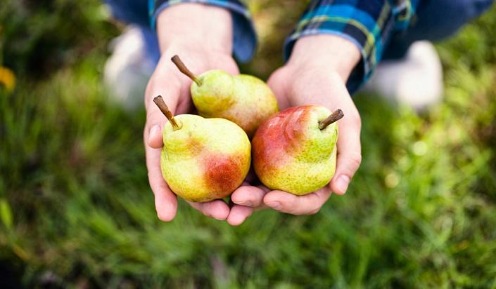 Как правильно выбирать фрукты. Полезные рекомендации
