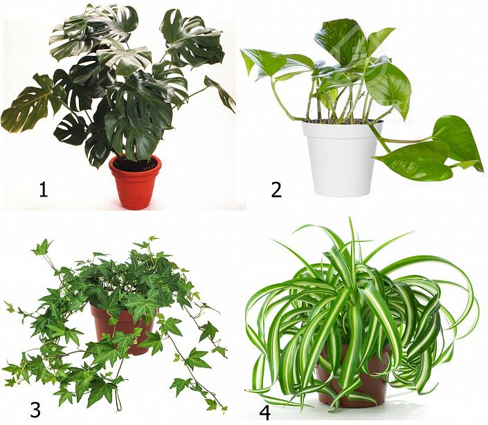 Как комнатные растения делают нашу жизнь лучше